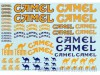 Calcas Camel
